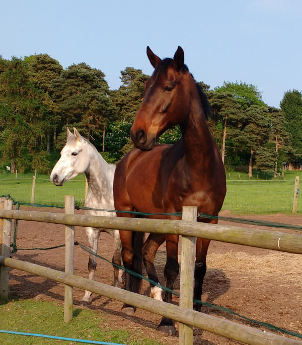 Calm Healthy Horses
