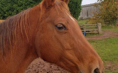 Lulu Part 2 A Calm Healthy Horse